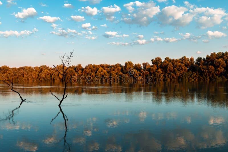 Вегетация и живая природа перепада Дуная стоковое изображение rf