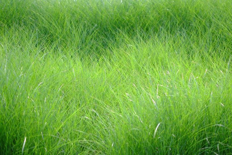 Вегетация стоковое фото rf