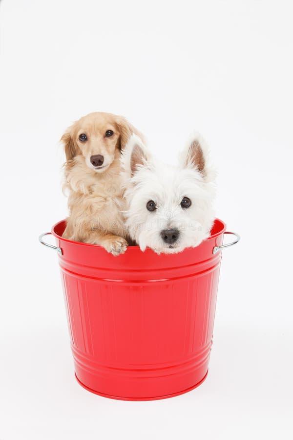 Ведро и собаки стоковая фотография