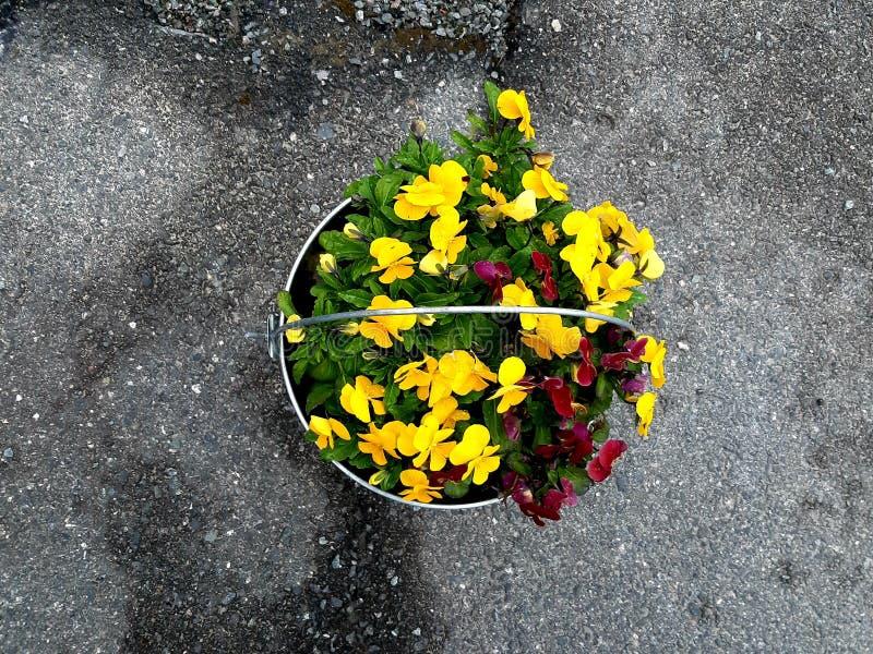 Ведро цинка можно также использовать как цветочный горшок стоковое фото