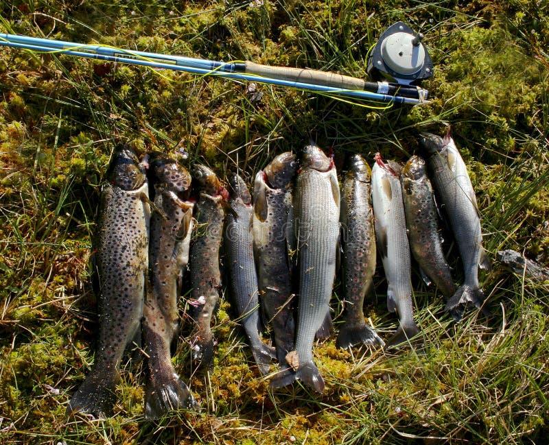 везение s рыболова стоковая фотография rf