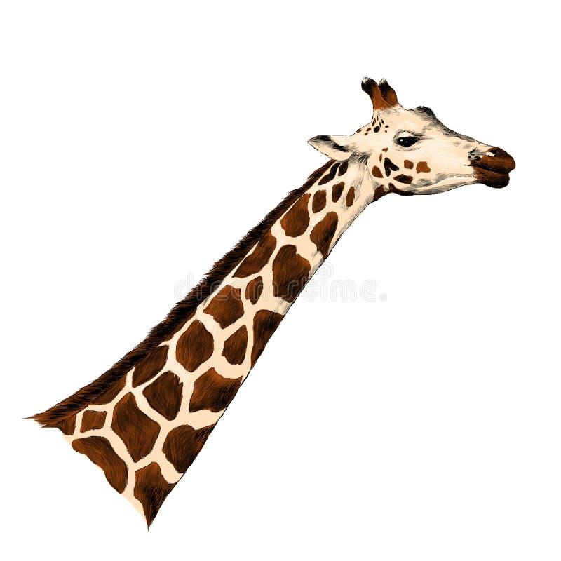 Векторные графики эскиза жирафа головные иллюстрация вектора