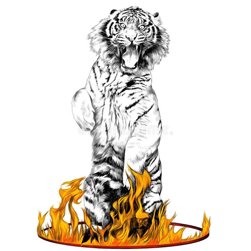 Векторные графики эскиза тигра иллюстрация штока