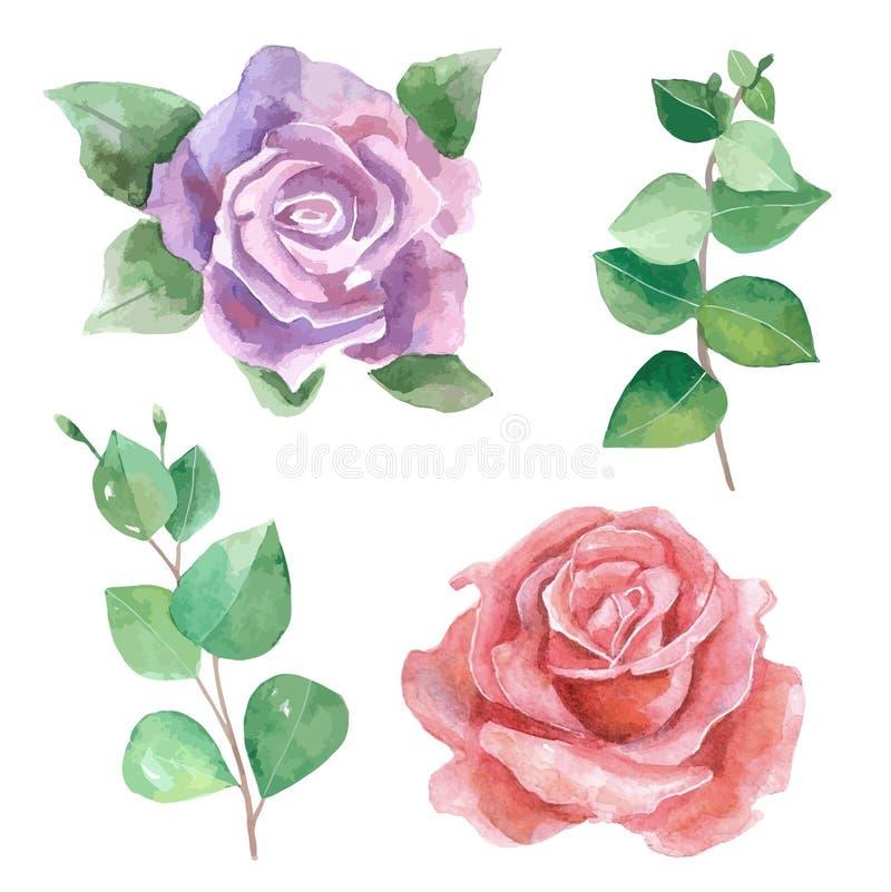 Векторы watercolour роз бесплатная иллюстрация