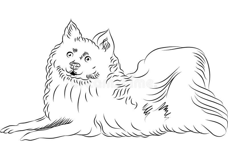 вектор американской собаки breed эскимосский лежа иллюстрация вектора