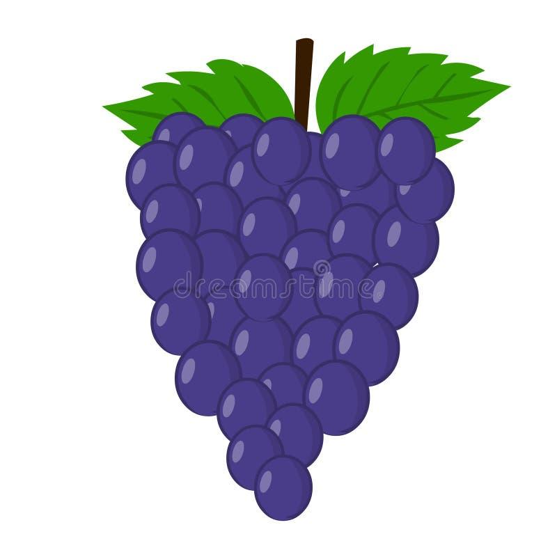 Вектор виноградины Свежая иллюстрация виноградины иллюстрация вектора