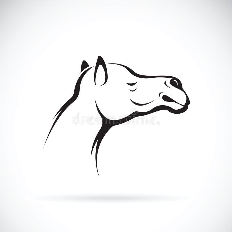 Вектор головы верблюда на белой предпосылке angoras иллюстрация вектора