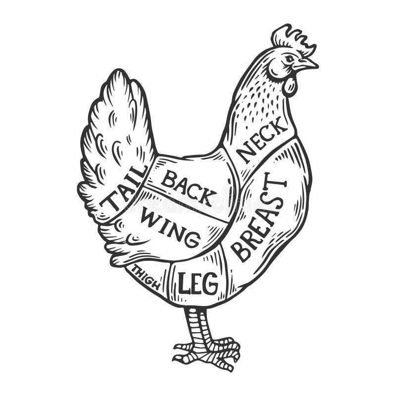 Вектор гравировки цыпленка диаграммы мяса иллюстрация вектора