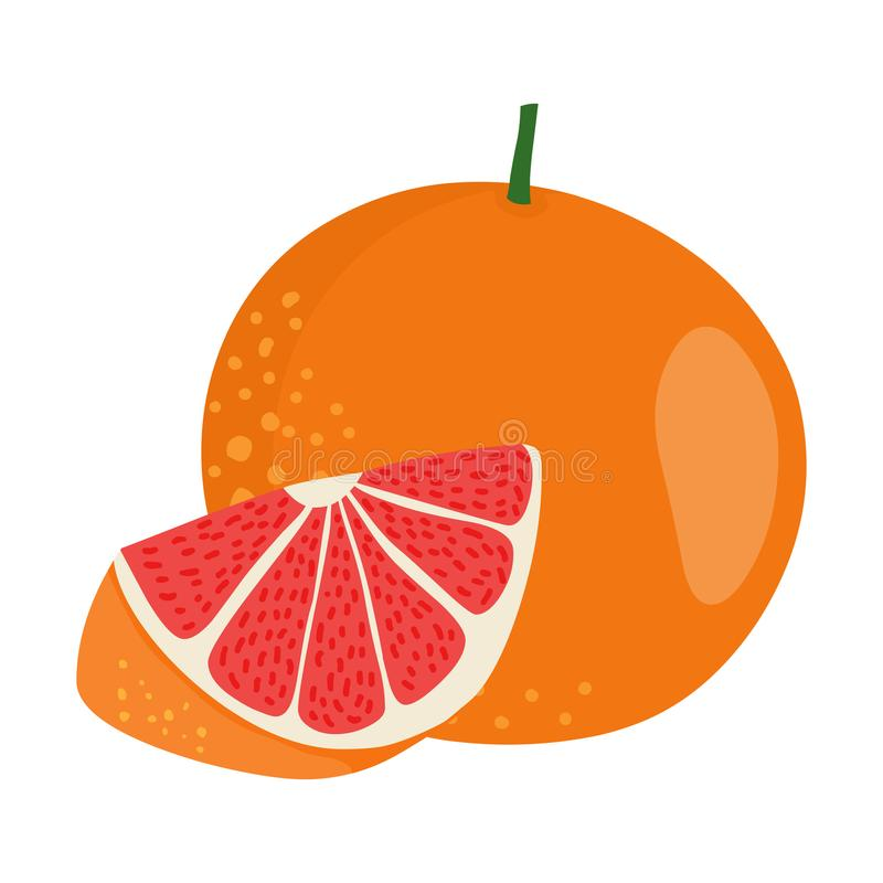 Вектор грейпфрута Свежая иллюстрация грейпфрута иллюстрация вектора