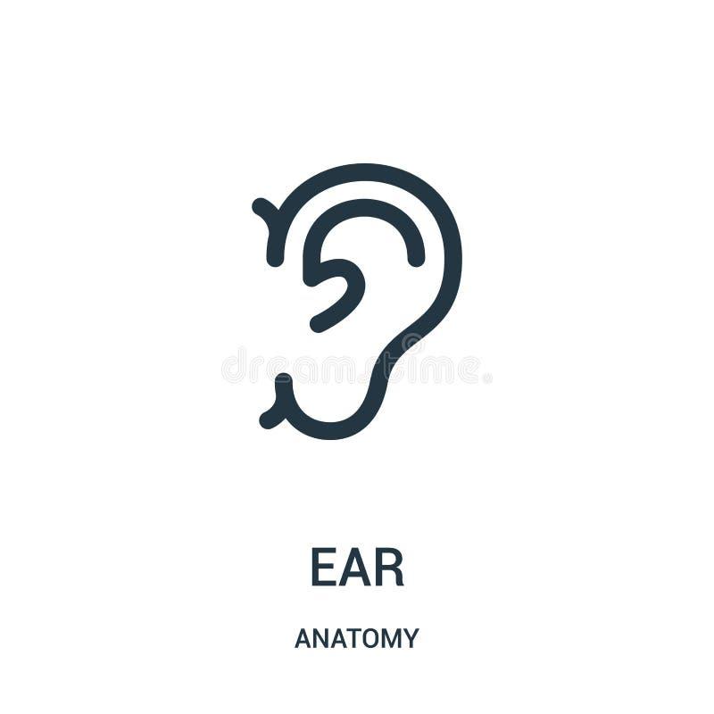вектор значка уха от собрания анатомии Тонкая линия иллюстрация вектора значка плана уха Линейный символ для пользы на сети и чер иллюстрация штока