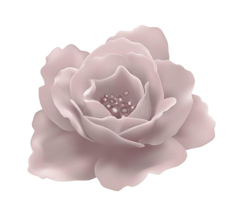Вектор изолировал мягко розовый цветок стоковое фото