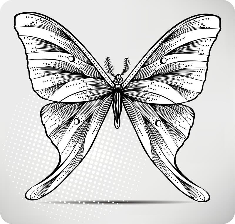вектор иллюстрации руки чертежа бабочки иллюстрация штока