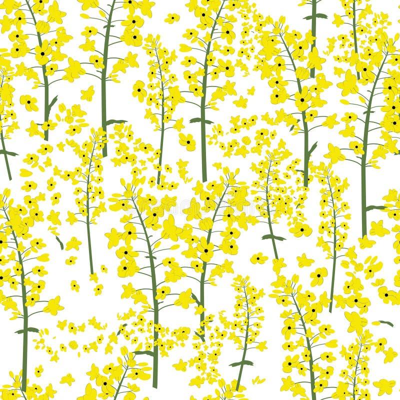 Вектор канола цветка рапса безшовный иллюстрация штока