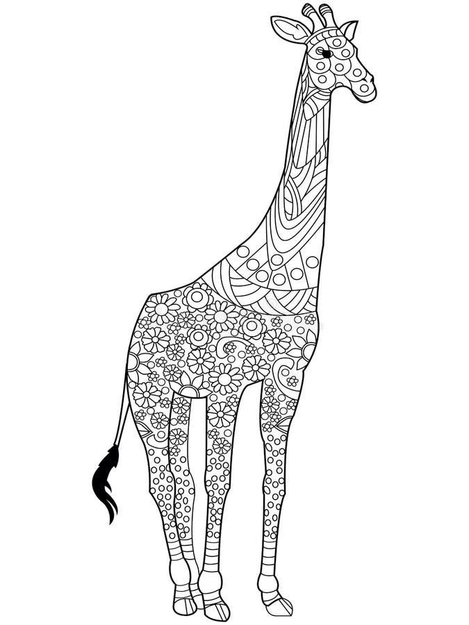 Вектор книжка-раскраски жирафа для взрослых Иллюстрация ...