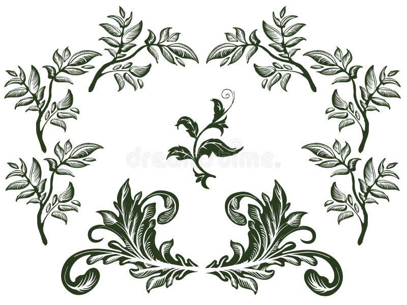 вектор комплекта элементов флористический иллюстрация вектора