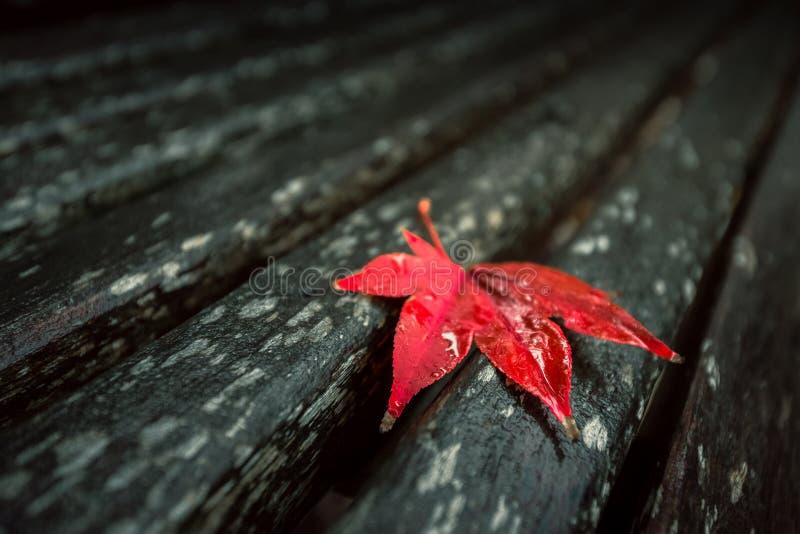 вектор красного цвета клена листьев графиков стоковая фотография