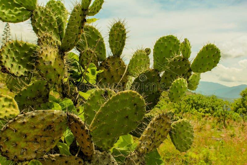 вектор ландшафта предпосылки мексиканский померанцовый стоковое фото rf