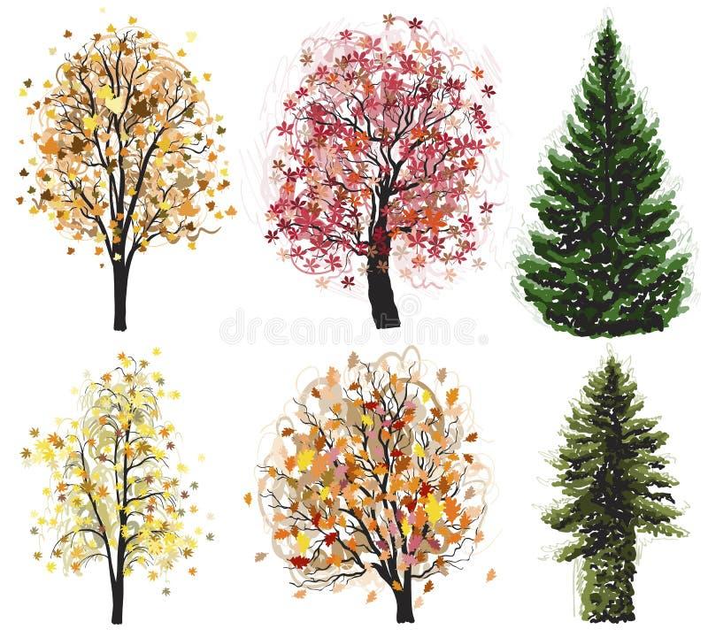 Вектор лиственный и coniferous установленные деревья осени иллюстрация вектора