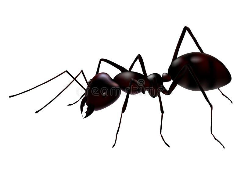 вектор муравея иллюстрация вектора
