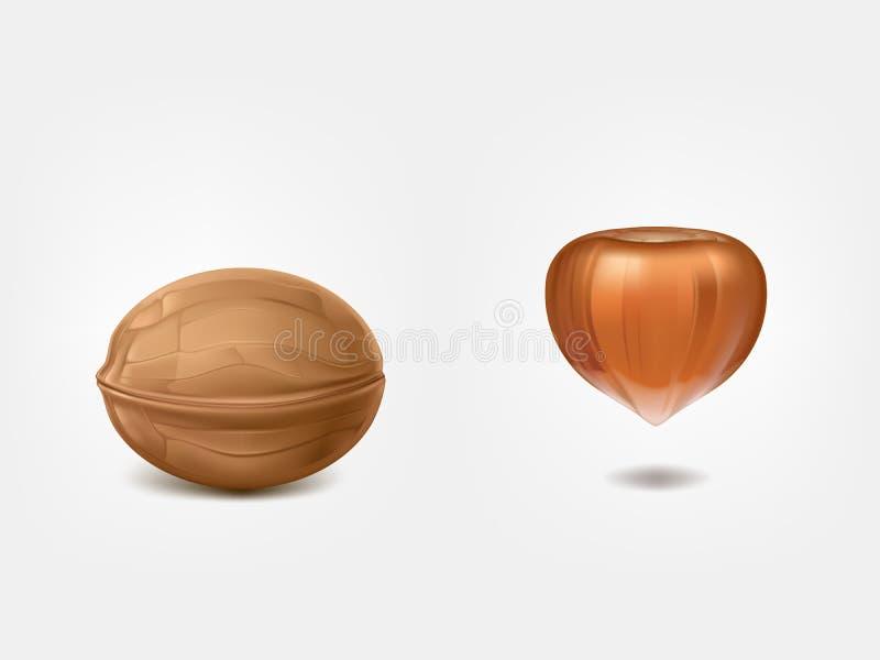 Вектор обстреливаемого грецкого ореха и сырцового фундука реалистический иллюстрация штока