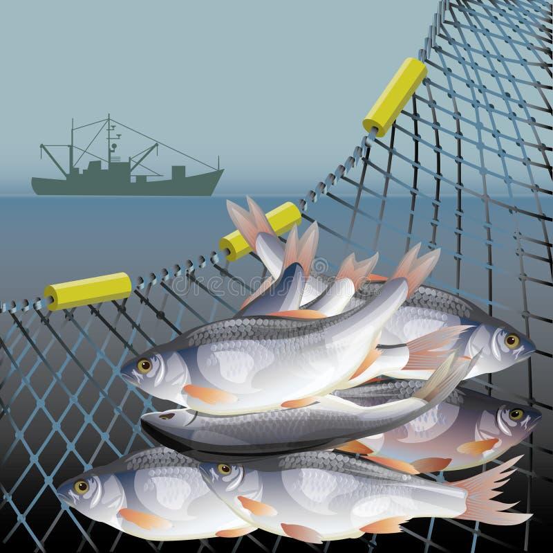 Вектор плаката рыбозавода стоковые фото