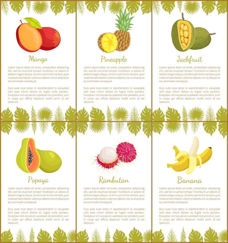 Вектор плакатов манго и ананаса и банана иллюстрация штока