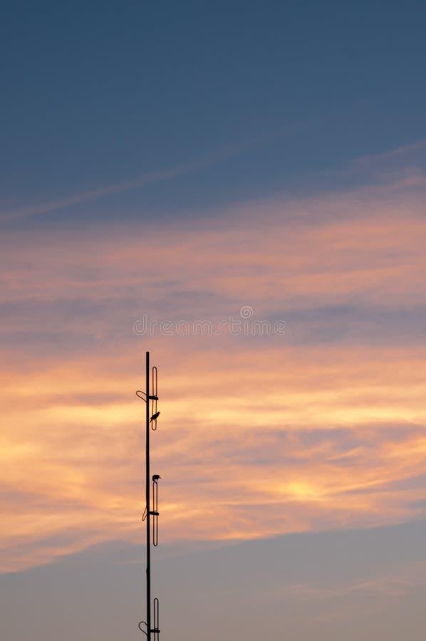 вектор природы предпосылки красивейший сделанный цветастый заход солнца драматическое небо стоковые изображения