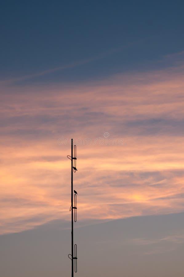 вектор природы предпосылки красивейший сделанный цветастый заход солнца драматическое небо стоковые изображения rf