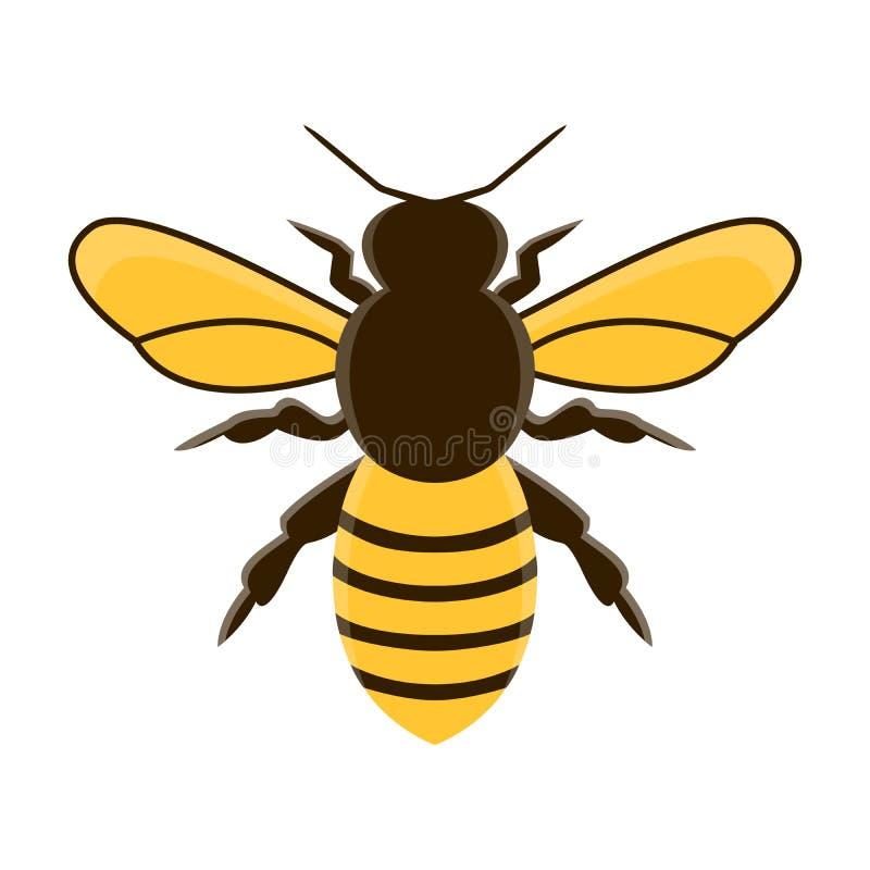 Вектор пчелы меда современный плоский изолированная иллюстрация руки кнопки нажимающ женщину старта s иллюстрация вектора