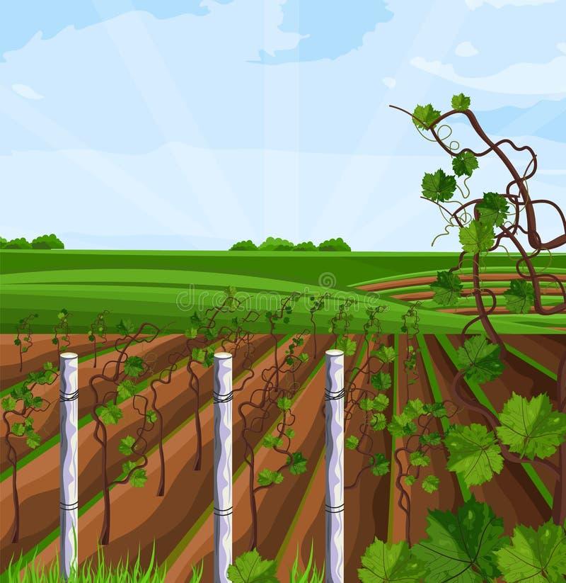 Вектор сбора виноградника растущий Красивые поля лета и Mountain View иллюстрация штока