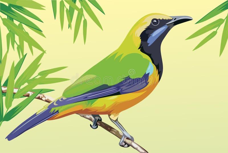 вектор 3 серий иллюстрации шаржа птицы иллюстрация вектора