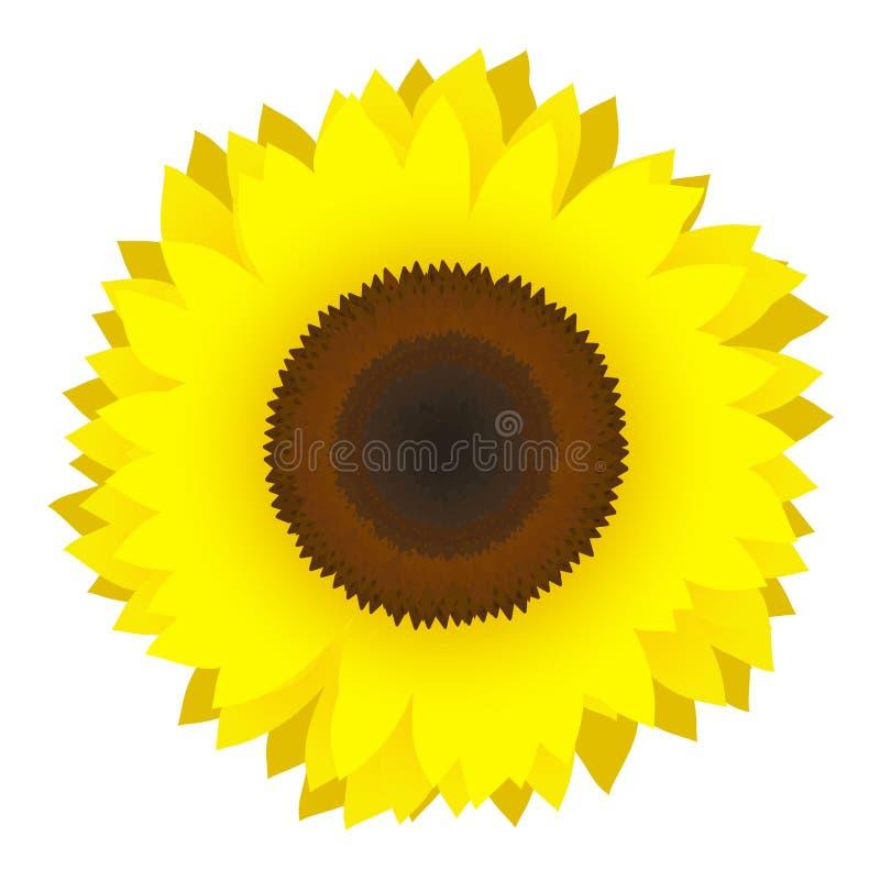 вектор солнцецвета иллюстрация штока