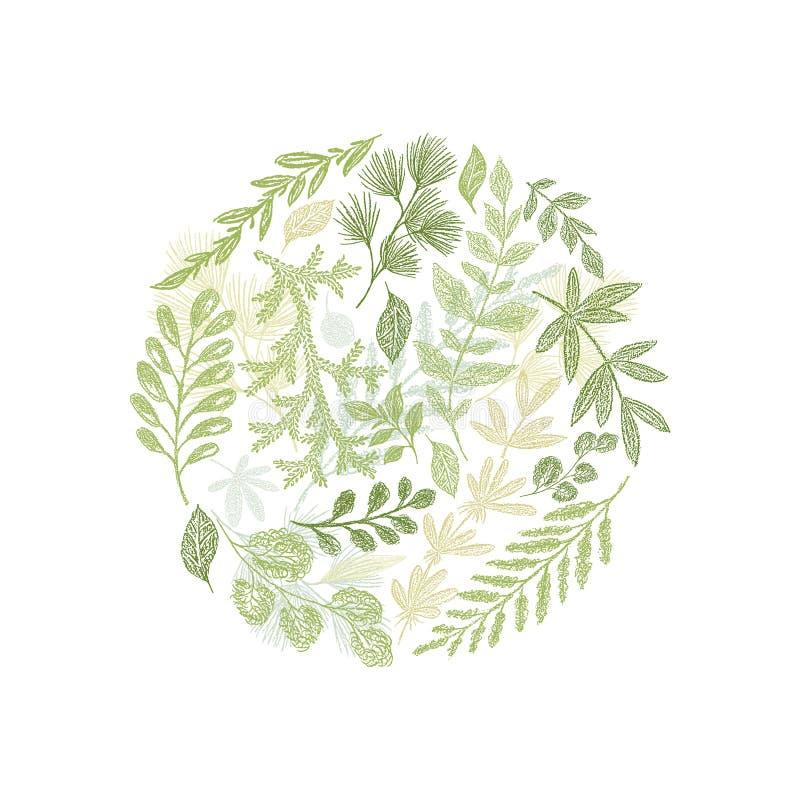 Вектор состава круга зеленой флористической нарисованный рукой иллюстрация вектора