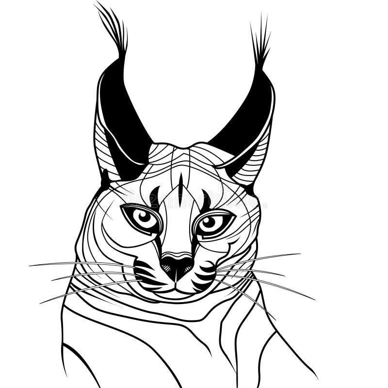 Вектор татуировки эскиза дикого животного котенка кота caracal иллюстрация вектора