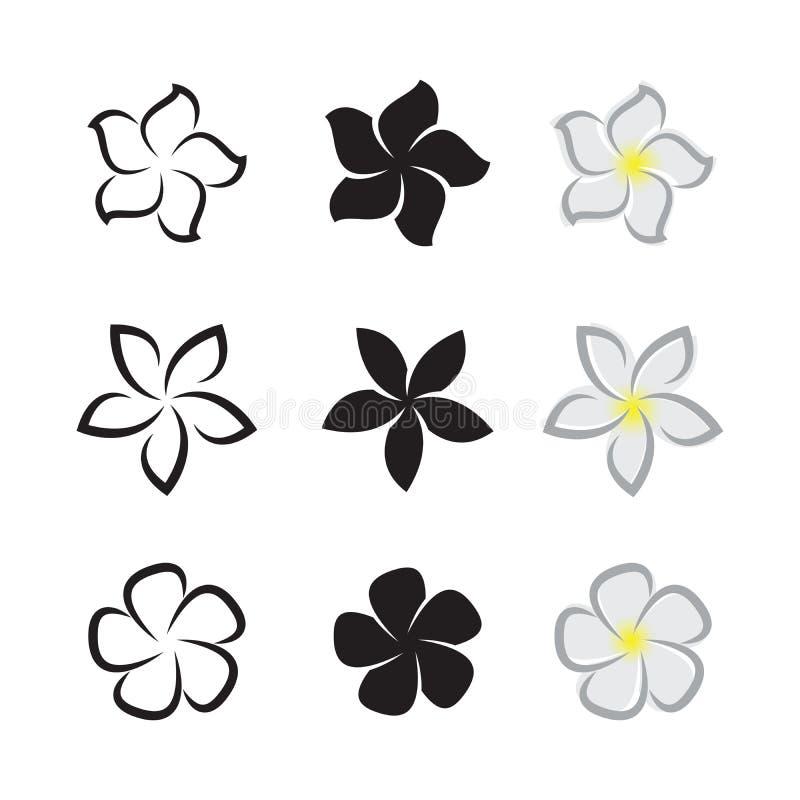 Вектор тропического plumeria frangipani цветков на белом backgr иллюстрация вектора