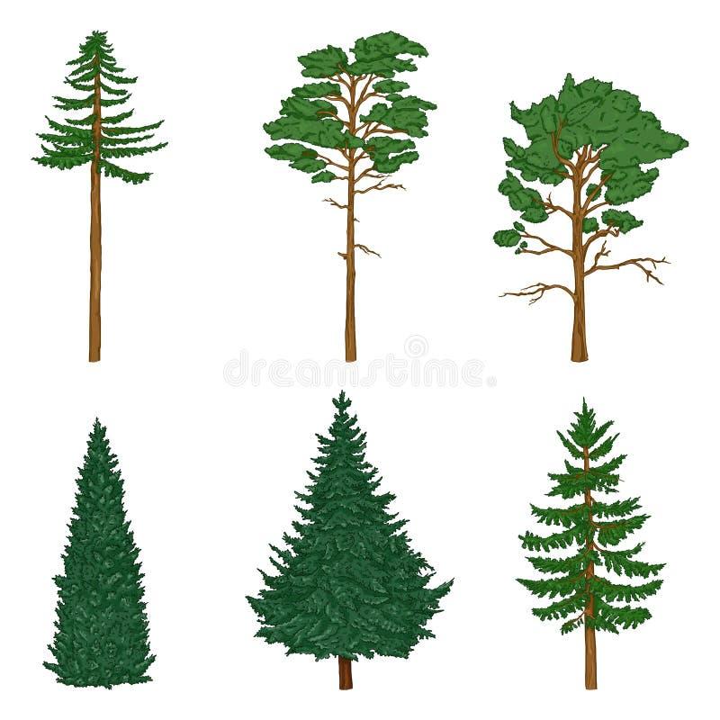 Вектор установил деревьев Pin мультфильма, кедра, спруса иллюстрация вектора