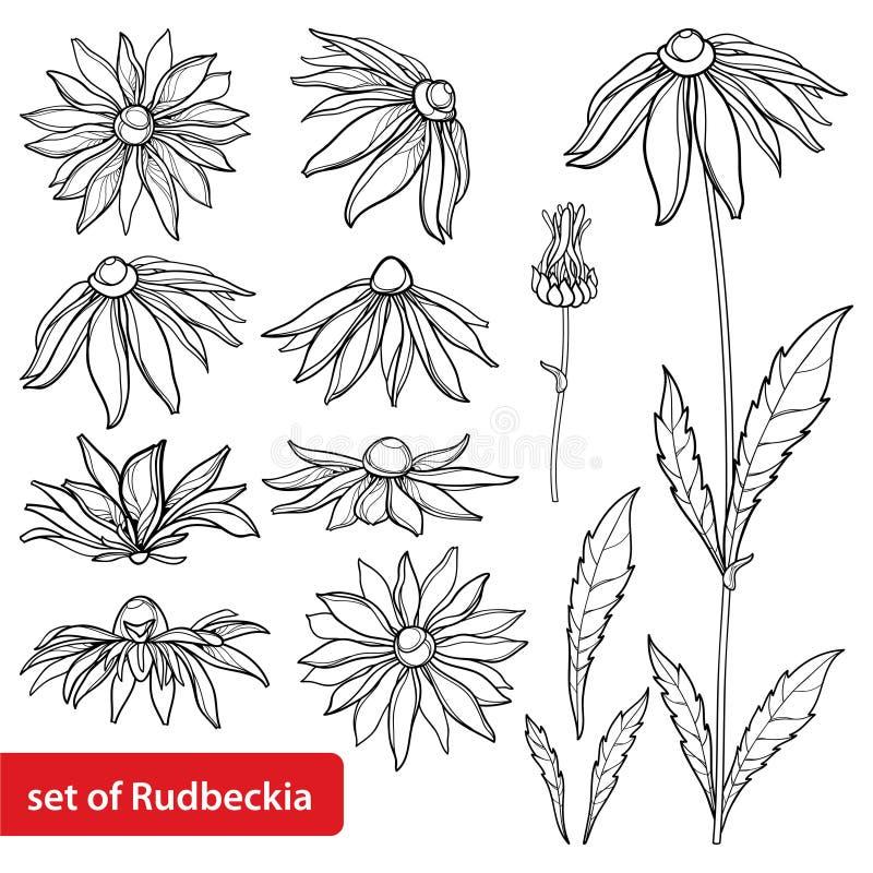 Вектор установил с hirta Rudbeckia плана или черно-наблюданным пуком цветка Сьюзан, богато украшенными лист и бутоном в черноте и