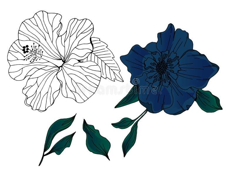 Вектор установил цветков и листьев руки вычерченных иллюстрация штока