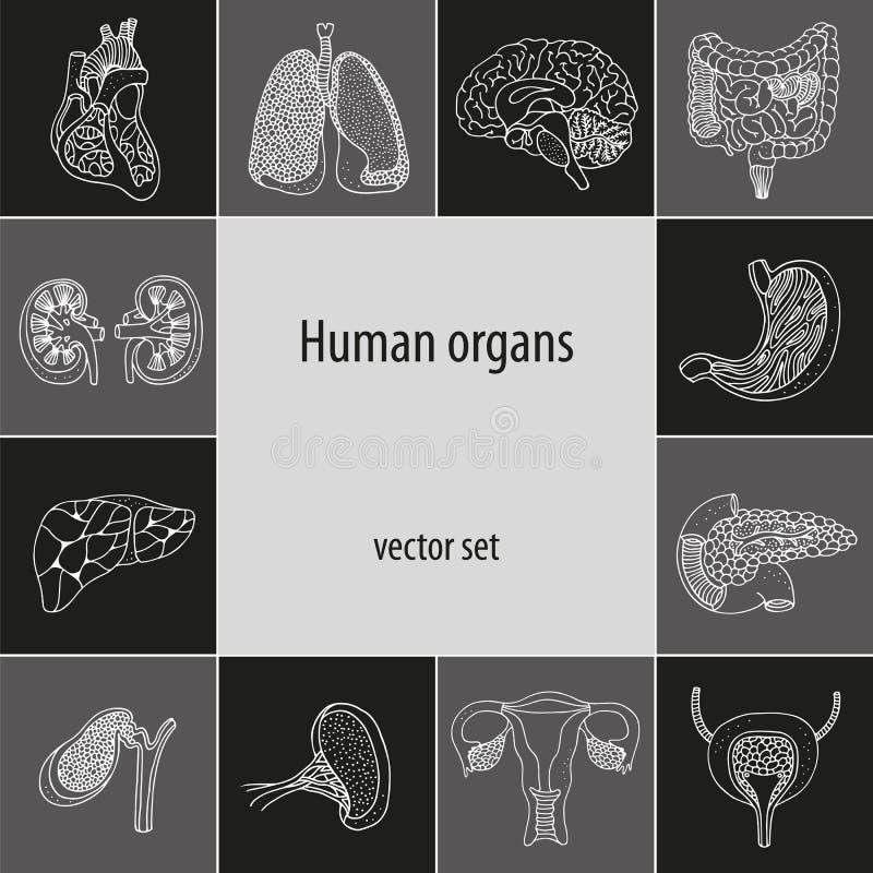 Вектор установленный с человеческими внутренними органами иллюстрация штока