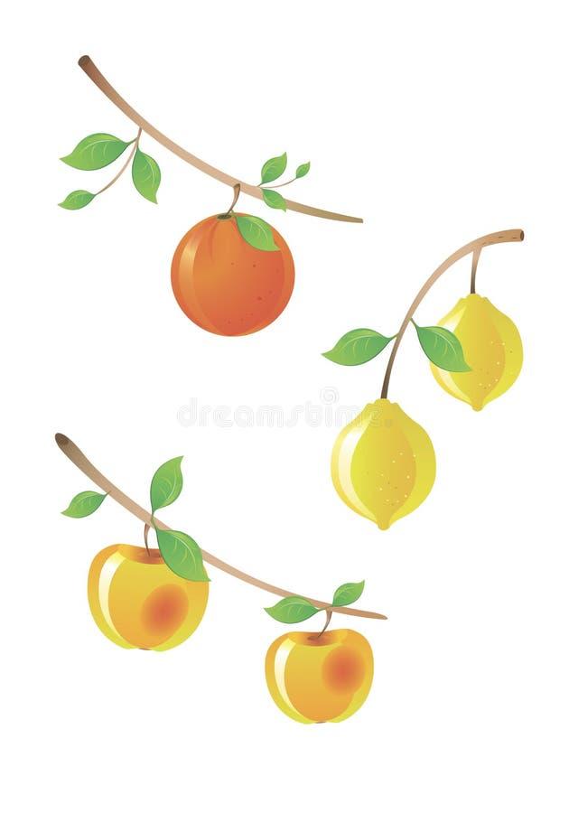 вектор фруктового дерев дерева ветви стоковые изображения