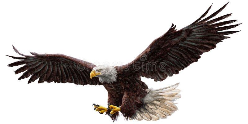 Вектор цвета мухы белоголового орлана иллюстрация вектора