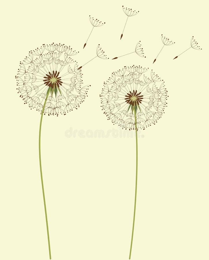 Вектор цветков одуванчика иллюстрация штока
