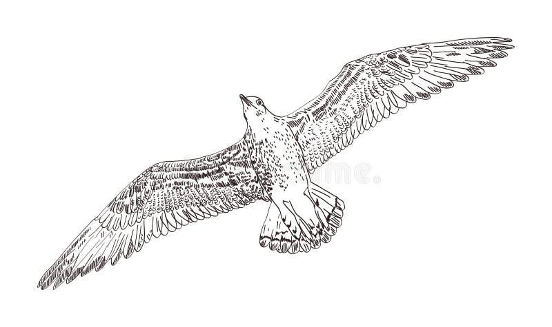 Вектор чайки иллюстрация штока