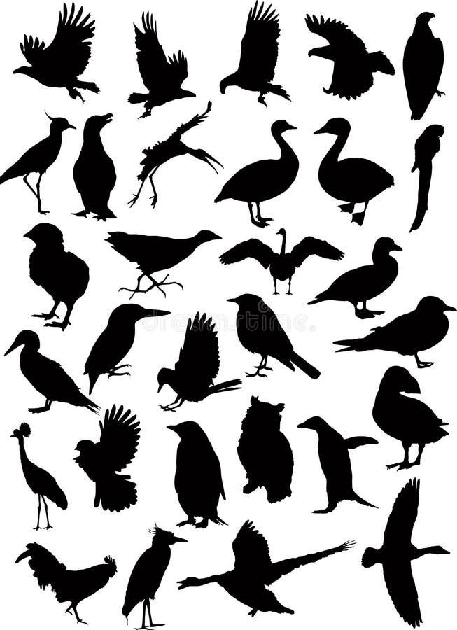 вектор 37 силуэтов птицы стоковая фотография rf