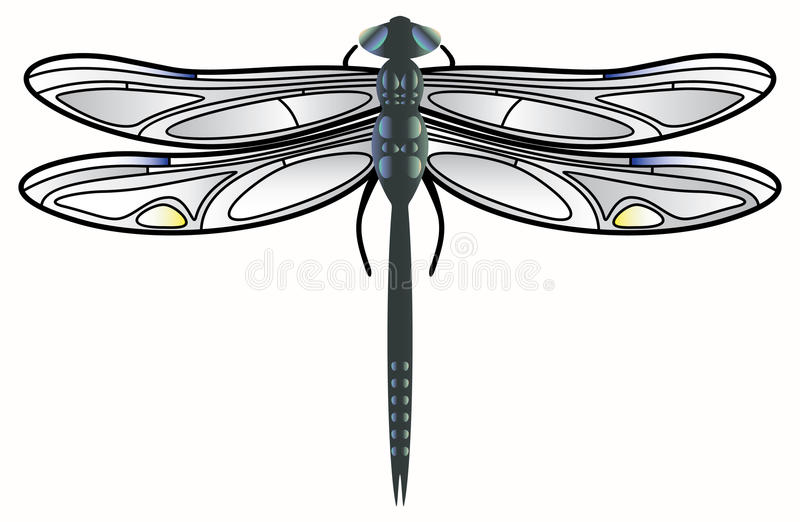 вектор dragonfly иллюстрация вектора