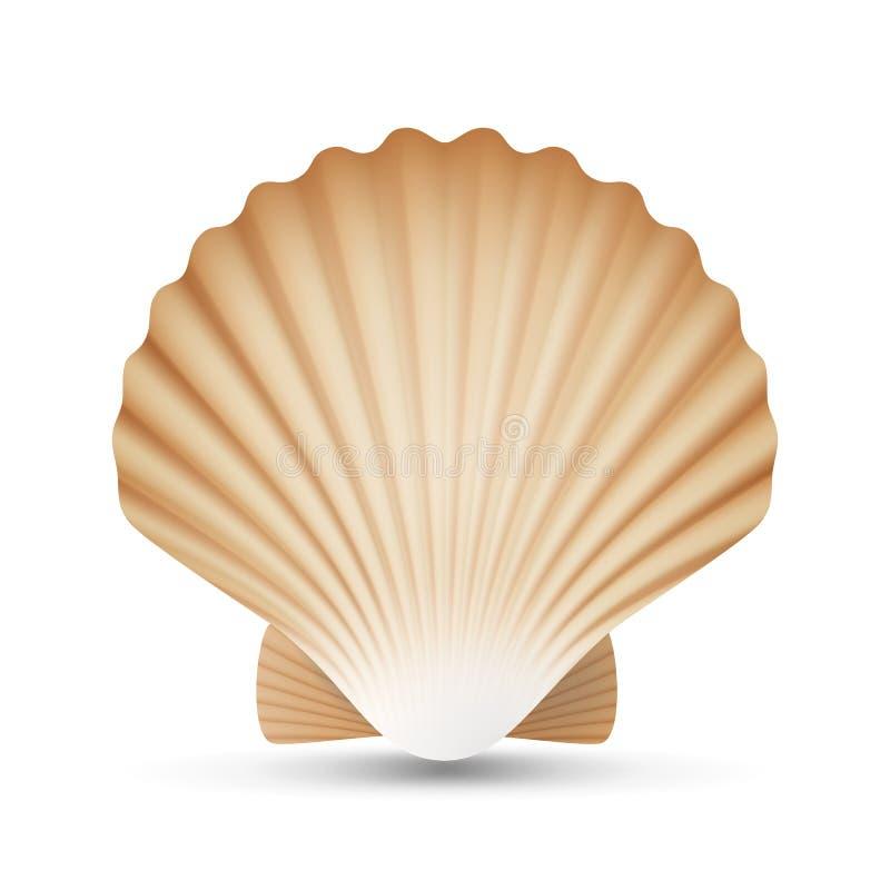 Вектор seashell Scallop Реалистический конец раковины моря вверх Изолировано на белизне иллюстрация бесплатная иллюстрация