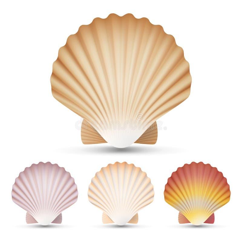 Вектор Seashell Scallop установленный Экзотическая раковина Scallops сувенира на белой иллюстрации предпосылки бесплатная иллюстрация