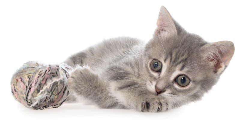 Великобританский положенный котенок tabby shorthair и игры с шариком пряжи стоковая фотография