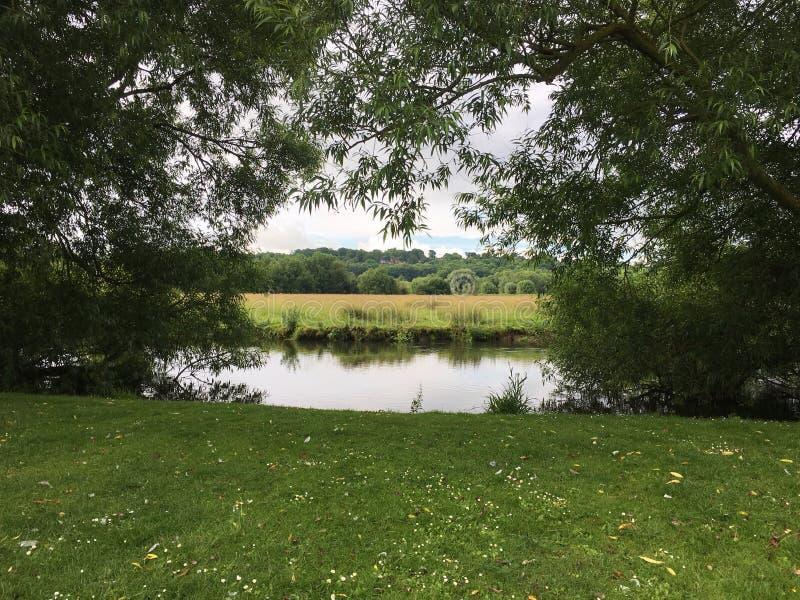 Великобританское одичалое поле на речном береге увиденном через раскрывать деревьев стоковое фото