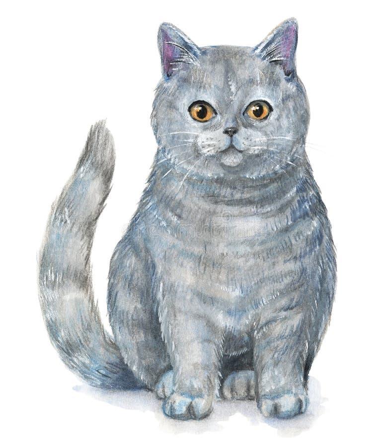 великобританское shorthair кота иллюстрация вектора